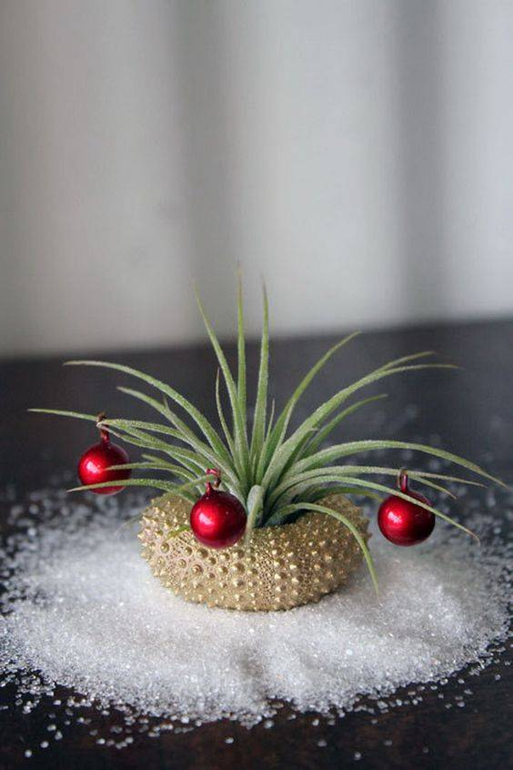 Christmas Plants decoration